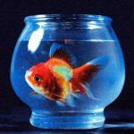 Vince Staplesの「Big Fish Theory」は6月リリースのベスト?誰にも擦り寄らない彼の音【一聴レビュー】
